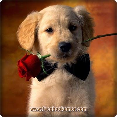 Imagen bonita de perro romántico para facebook