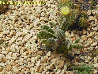 Plantas para jardines mediterr neos tipos de cactus for Tipos de cactus