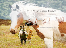 The Point Arena Pintos Book