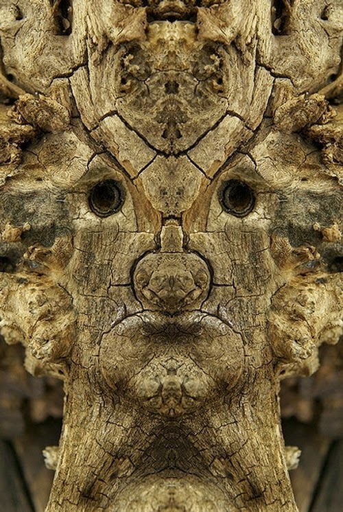 01-Elido-Turco-Mirrored-Faces-in-Tree-Photography-www-designstack-co