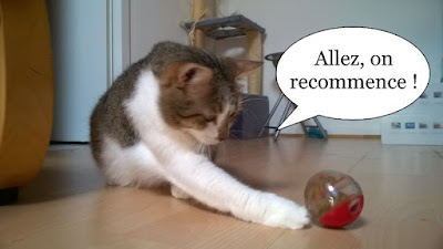 Chatte tape dans balle de croquettes.
