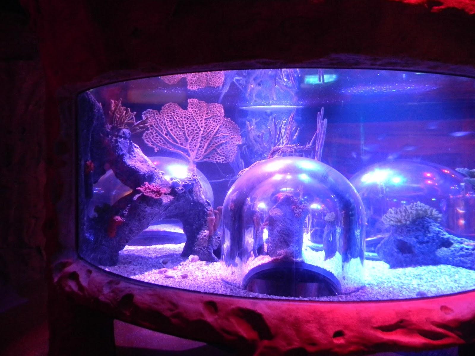 """The """"Unknown"""" Florida: Sea Life Aquarium- Orlando, FL"""