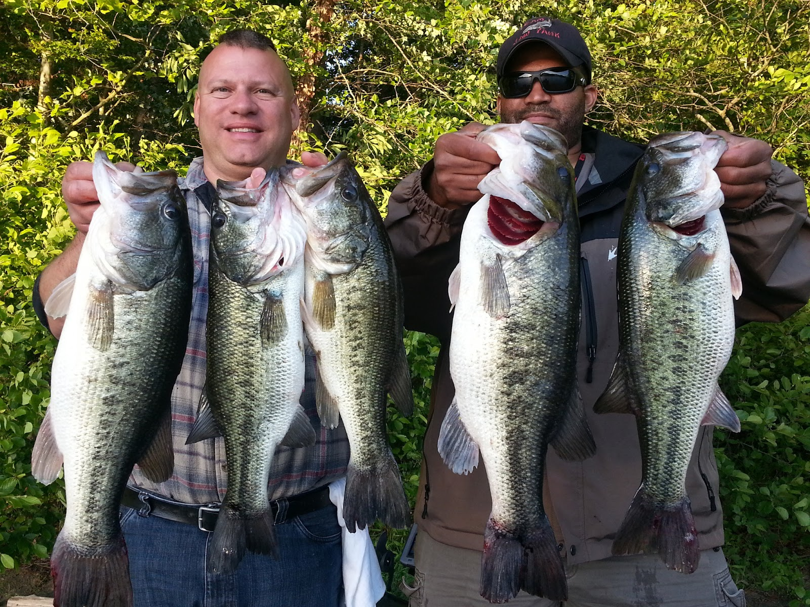 Central virginia outdoors lake anna bass fishing and for Lake anna fishing