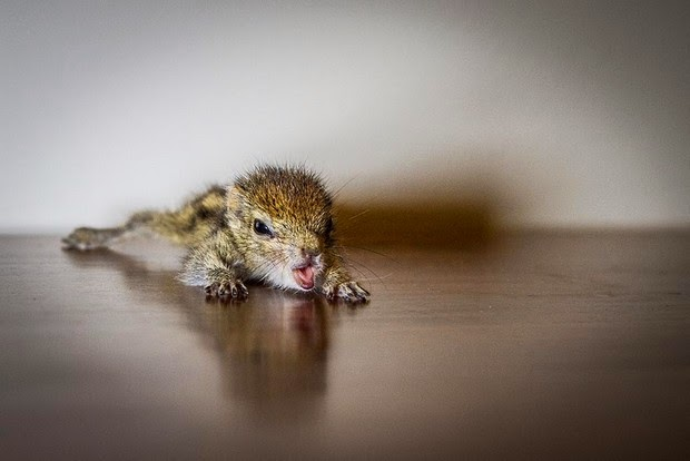 abandoned squirrel sri lanka