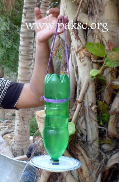 Diy Water Feeder For Wild Bird From Pet Bottle