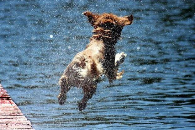 Amazing Animals Jump Seen On www.coolpicturegallery.us