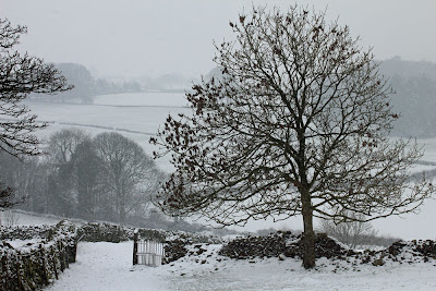Winter February 2013, Gill Banks from Flan, Ulverston, Cumbria