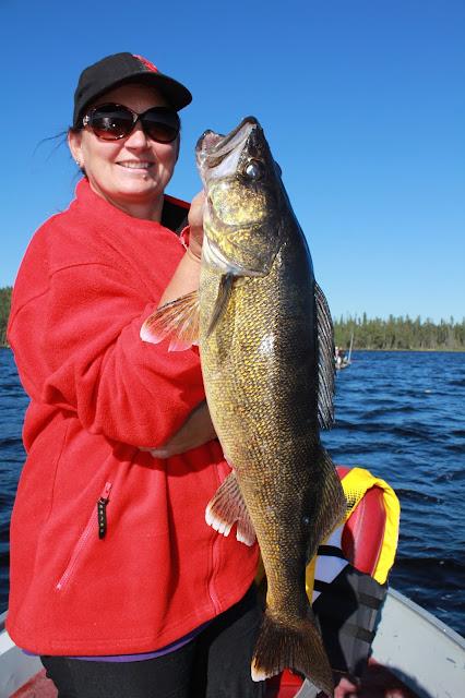 Ontario fishing report trophy walleye anglers kingdom nungesser lake north of red lake ontario.