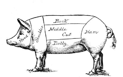 Why Do Jewish Dietary Laws Prohibit Pigs on cuts of meat clip art