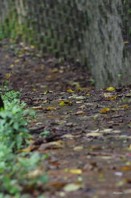 雞南山散步,碎石步道之前的步道雖然平,但逢雨後有些滑,走在上面要小心一點。