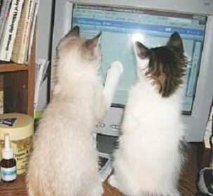 Aristocats' online Felinology phd degree program