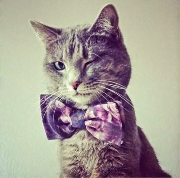 Funny cats - part 97 (40 pics + 10 gifs), cat pictures, cat with bow tie blinking his eye