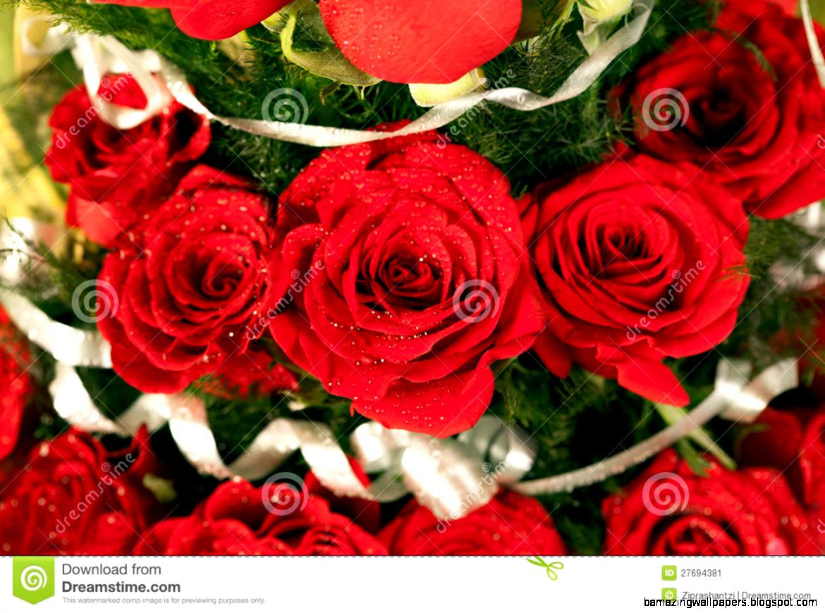 Beautiful Bunch Of Red Rose Flowers Amazing Wallpapers
