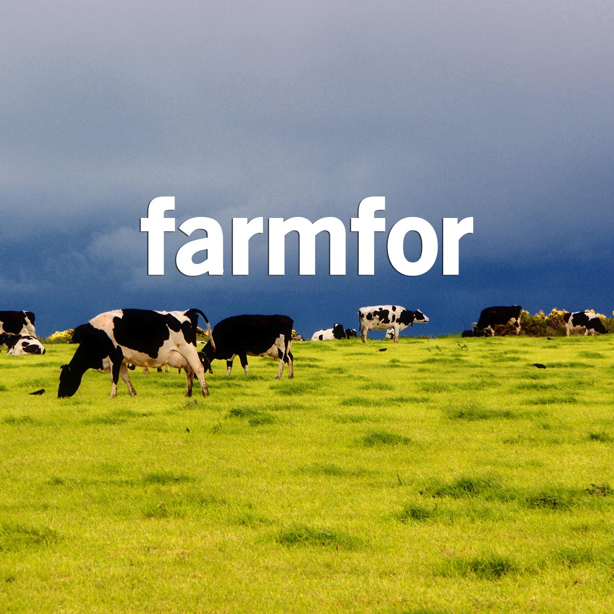 Acesse o Blog do Farmfor