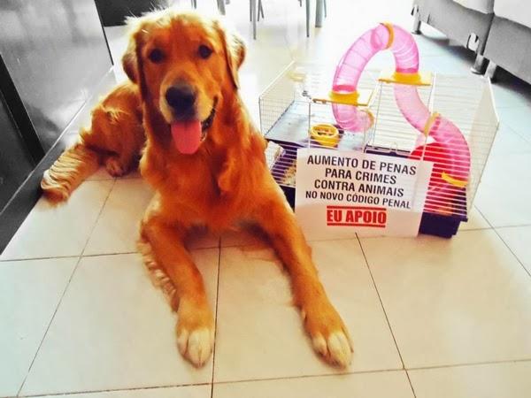 cachorro protestando manifestaçao apoio aumento penas crimes animais