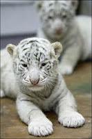 preciosos bebes