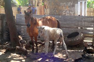 Kuda Liar di Pulau Sumbawa