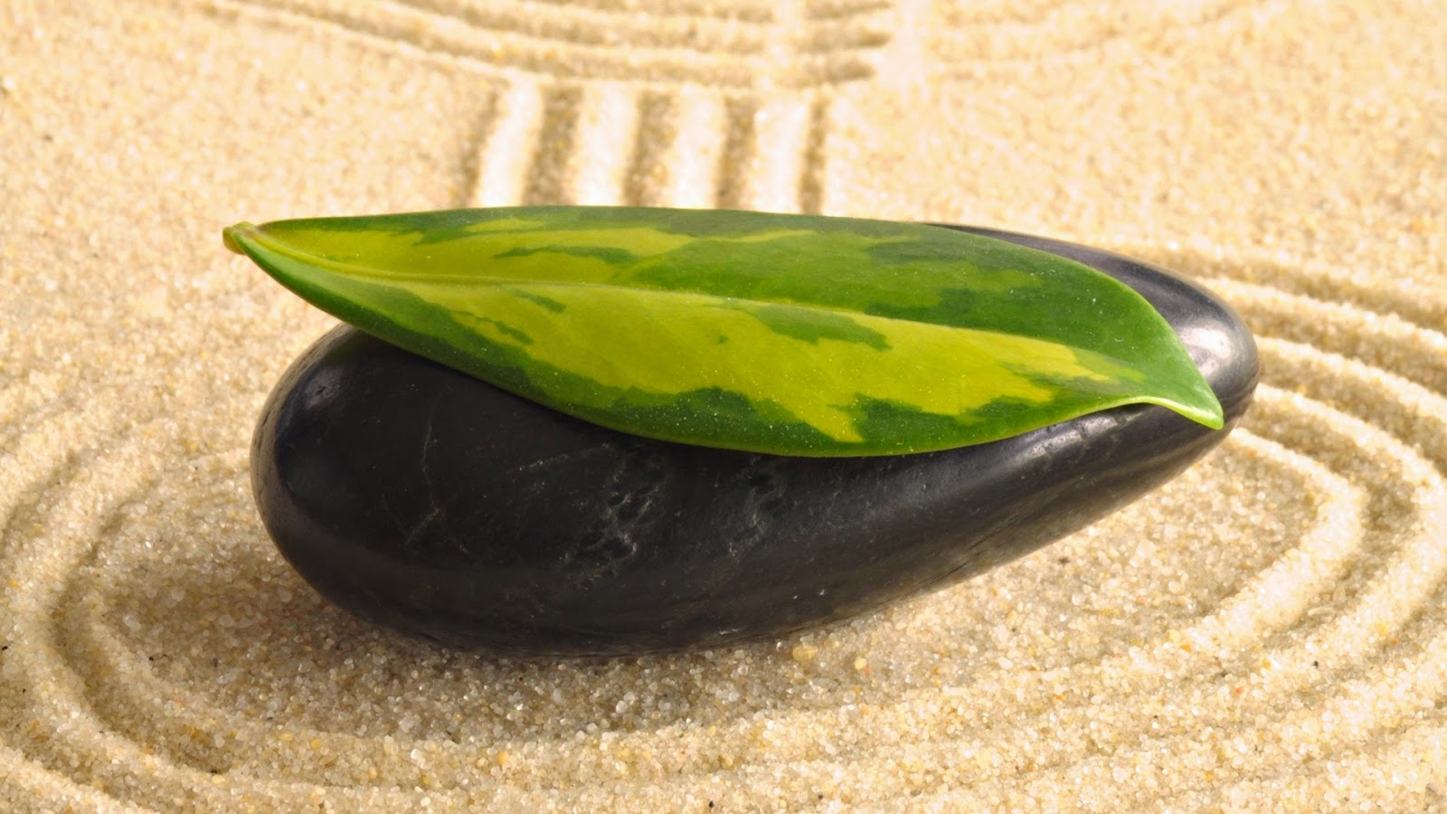 Green-leaf-on-Zen-black-pebble-stone-images-1920x1080-wallpap.jpg