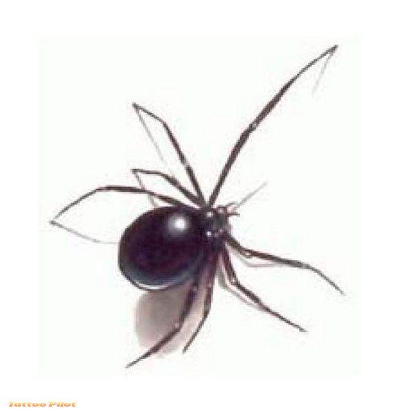 tattoo insights spider tattoo designs photos 2012 new. Black Bedroom Furniture Sets. Home Design Ideas
