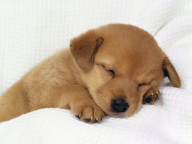 Cute Dog Puppy 26