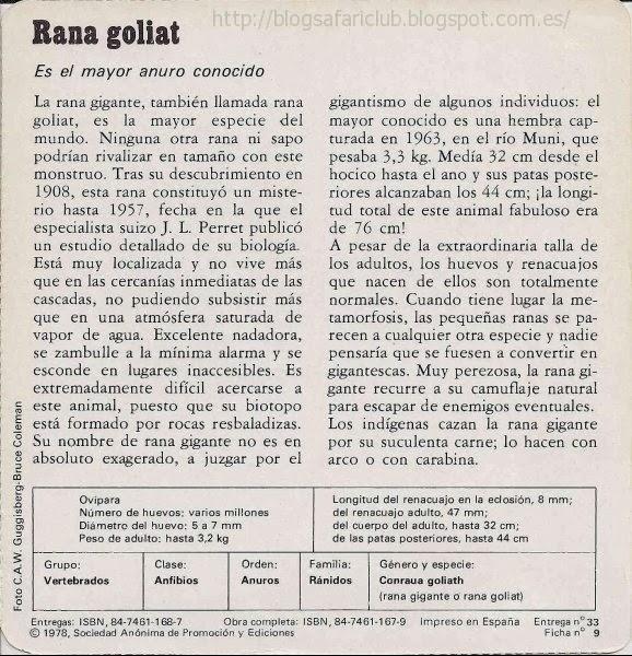 Blog Safari Club, características de la Rana goliat