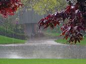#24 Rain Wallpaper