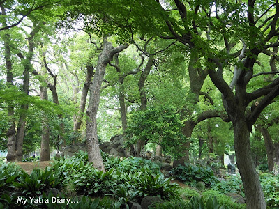 Thick forested groove at Hibiya Garden - Tokyo, Japan