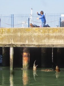 Seorang Nelayan Usir Kepiting Raksasa yang Akan Menyerang Kedua Anak ini
