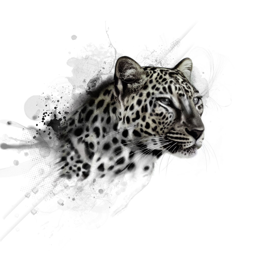 http://3.bp.blogspot.com/-AMeDIbjbEFk/UCIfWkr79DI/AAAAAAAADBU/qrovC9-7y_s/s1600/Leopard-Art-iPad-3-HD-Backgrounds.jpg