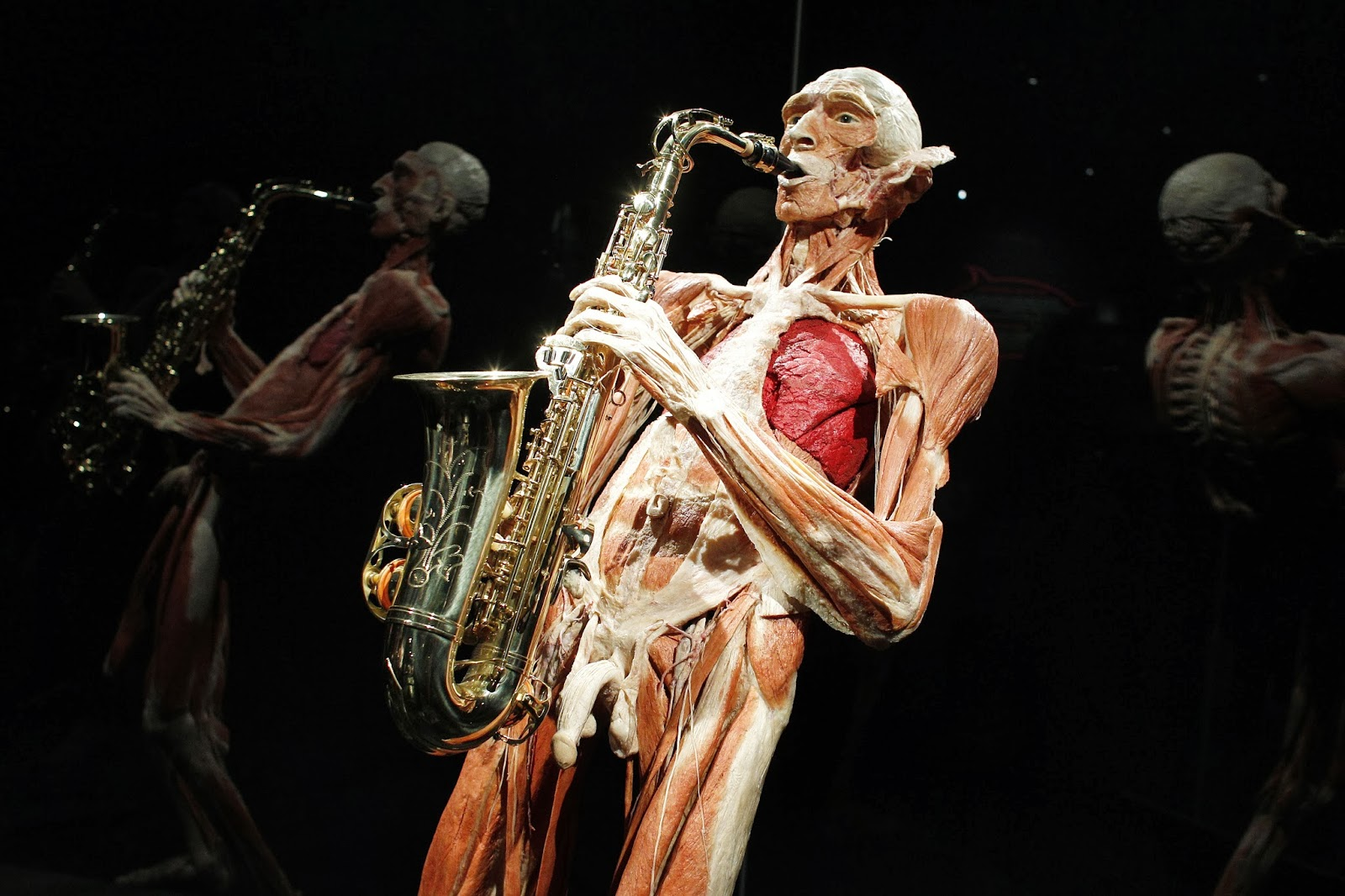 Body Worlds, Happiness, Project, Plastinated, Body, Human, Exhibition, Permanent, German,  Anatomist, Inventor, Technique, Gunther von Hagens, Amsterdam, Creation, Offbeat, Museum, Creator,