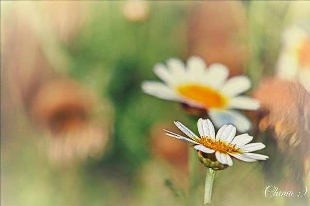 Flores silvestres en las sierra de Cadiz