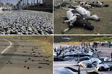 ALARMA MUNDIAL POR MUERTE MASIVA DE ANIMALES
