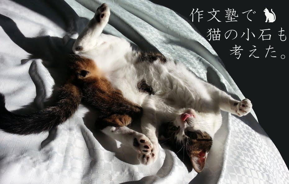 作文塾で猫の小石も考えた。