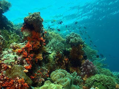 Amazing Coral - Wakatobi Island