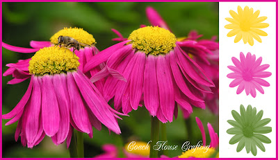 flowers, insect on flower, colour splash, pink flowers, floral