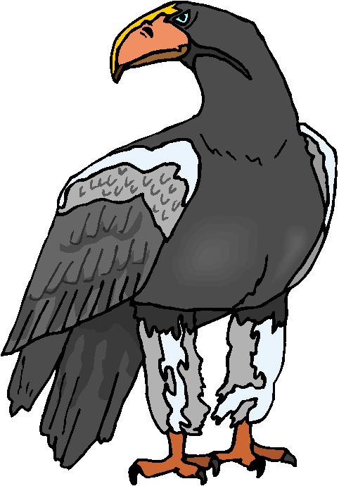 Wild Eagle Free Clipart