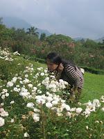 orang mencium bunga