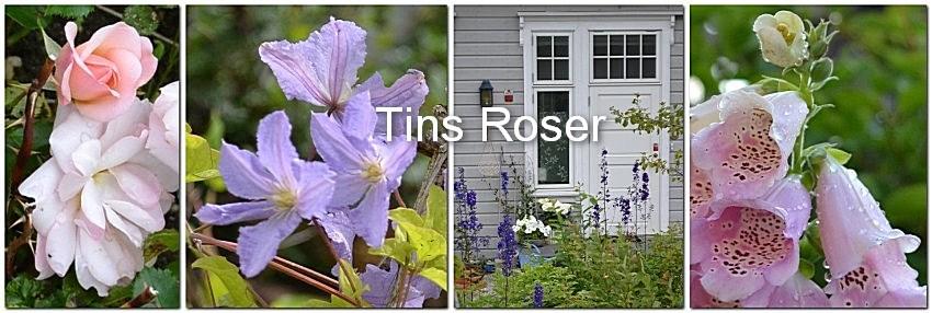 Tins Roser
