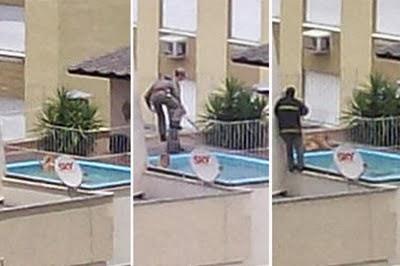 piscinas cães afogamento