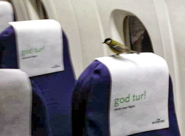 Funny animals of the week - 22 November 2013 (35 pics), bird inside a plane