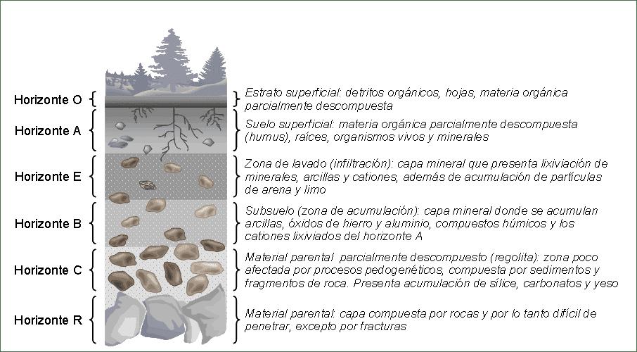El suelo y sus caracter sticas for El suelo y sus capas