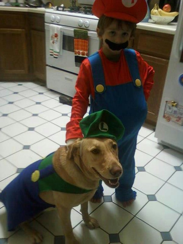 Funny and creative pet costumes, dog costumes, dressed up dog