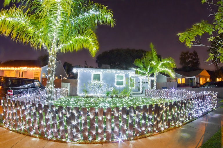 Tales of the flowers our christmas lights the palm trees are the toughest to do since my ladder only goes so high big thanks to richard this year for helping hand me strands of lights while im up publicscrutiny Image collections