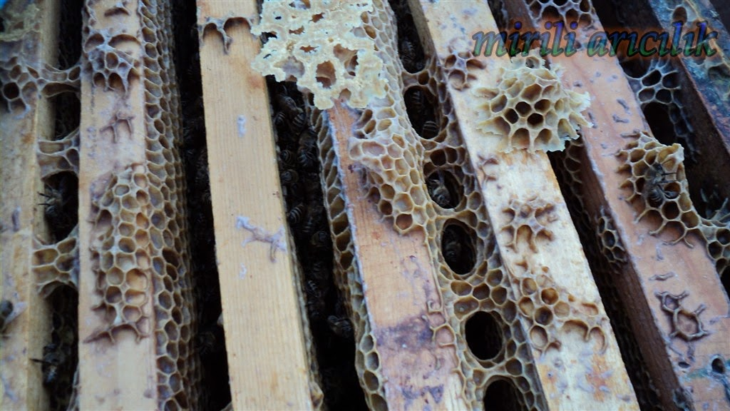 varroa ilaci