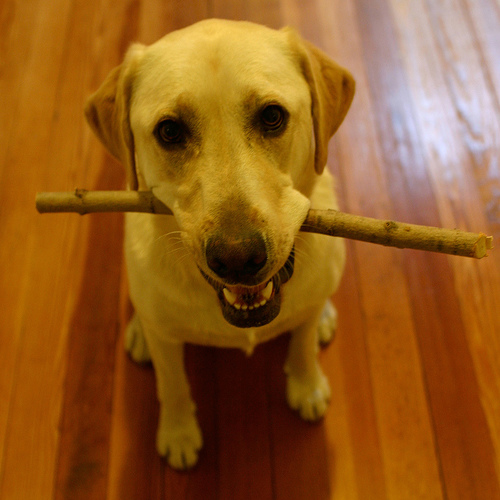 who says sticks aren't allowed in the house?
