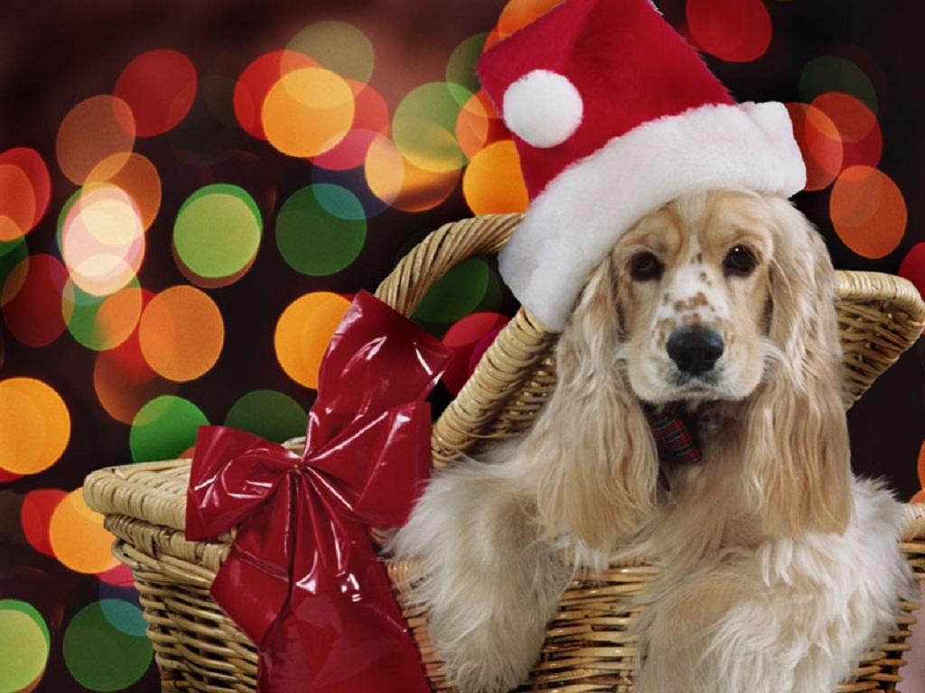 http://3.bp.blogspot.com/-AP6B3Rs1lx0/TcwBygvSYeI/AAAAAAAAM3Q/rGNRgdIHXU8/s1600/cute-dog-wallpaper-source_h37.jpg
