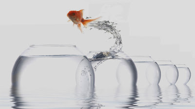 Jumping goldfish wallpapers