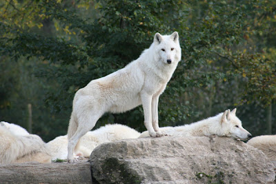 Самые красивые животные мира
