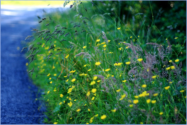 grass, blue, road, green,  Summer light © Annie Japaud Photography 2013