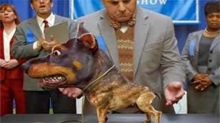 Ντόπερουάουα  - Η νέα ράτσα σκύλου που σπέρνει τον τρόμο
